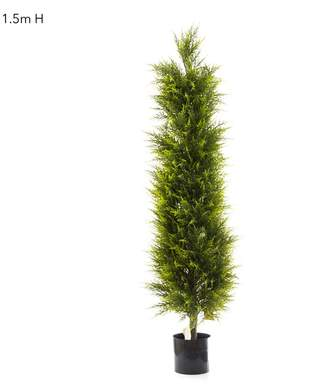 Emac & Lawton Cypress Pine 1.5m