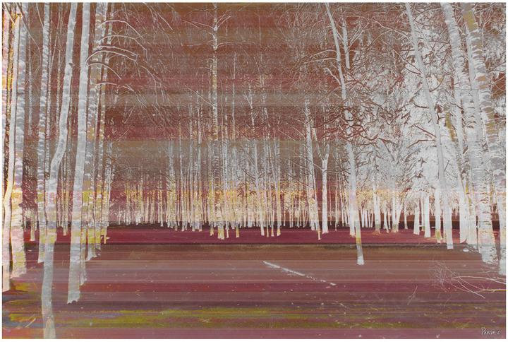 Parvez Taj Night Birch (Canvas)