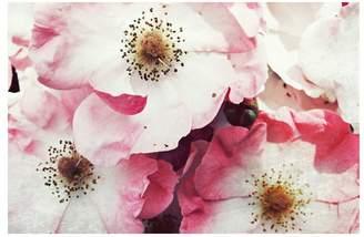 Pottery Barn Vintage Roses Framed Print by Lupen Grainne