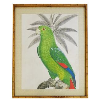 STUDY Searles Bird Framed Print