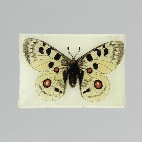 John Derian Apollo Butterfly Tray
