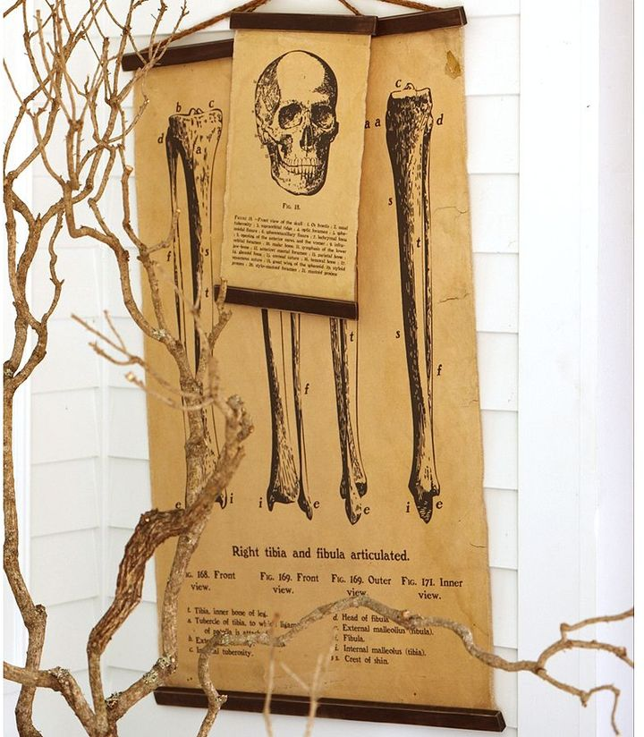 Unstretched Encyclopedia Skull & Bone Canvas