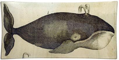 Spouting Whale Tray