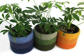 Papaver Vert Plant Cozy w Stripes