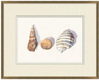 Pottery Barn Shell Collection Print