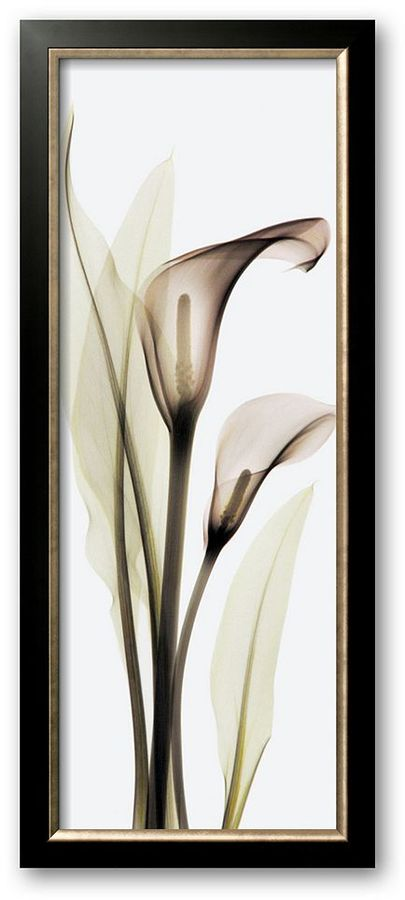 "CALLA Art.com lily"" framed art print by albert koetsier"