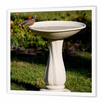 3dRose American Robin at bird bath Marion, Illinois, USA., Iron On Heat Transfer, 6 by 6-inch, For White Material