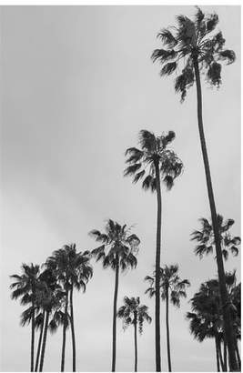 Pottery Barn Los Angeles Palm Trees By Jane Wilder