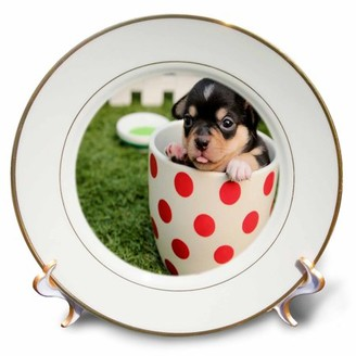 3dRose Image of Chihuahua Puppy In Polka Dot Teacup - Porcelain Plate, 8-inch