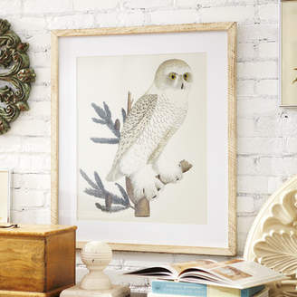 Birch Lane Owl Framed Print