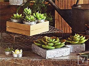 Roost Succulent Candle Collection