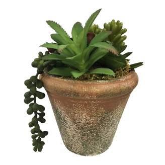 Sonoma Goods For Life SONOMA Goods for Life Artificial Succulent Potted Plant