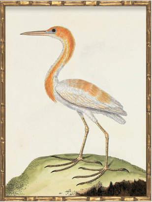 Serena & Lily Vintage Bird VIII in Bamboo Frame by Whalebone Creek Prints