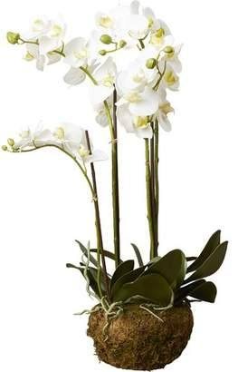 DAY Birger et Mikkelsen House of Hampton Phalaenopsis Faux Floral Orchids Flowers
