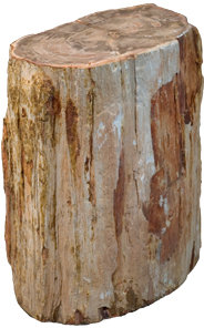Petrified Wood K