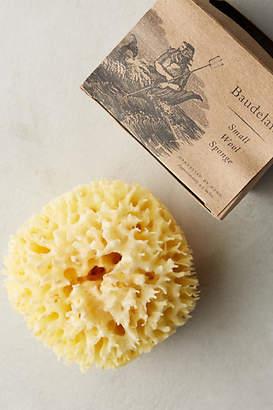 Anthropologie Baudelaire Small Wool Sponge