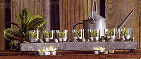 Roost Succulent Candle Garden