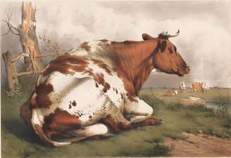 One Kings Lane Vintage Resting Bull - Thomas Sidney Cooper - 1839 - Ursus Books and Prints