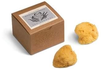 Baudelaire Silk Sponges