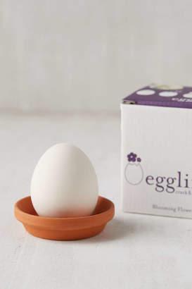 DIY Eggling Planter