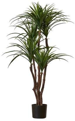 Beachcrest Home Tropical Yucca Tree in Pot