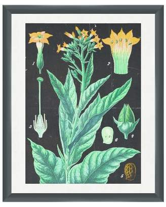 PTM Images Traditional Botanicals 18X22 Wall Art