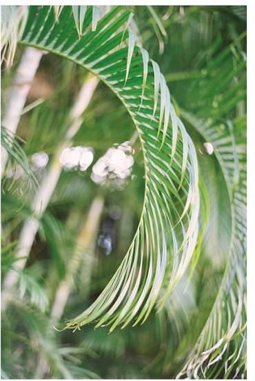 Palms By Justine Milton