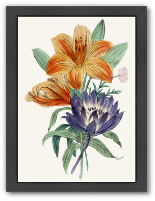 American Flora Lilium By New York Botanical Garden
