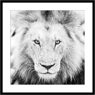 Casa Uno Lion Square Framed Print