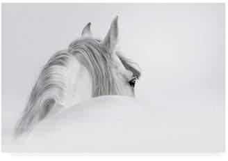 """White Horse PhotoINC Studio on White Canvas Art - 19.5"""" x 26"""""""