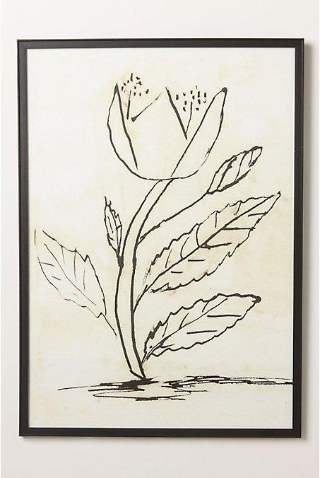 Pen & Ink Tulips