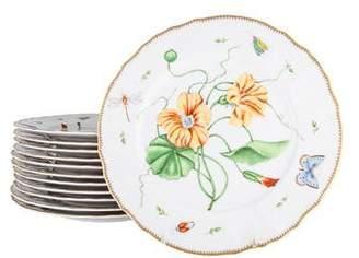 Anna Weatherley Set of 12 Porcelain Dinner Plates