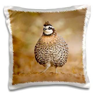 3dRose Northern Bobwhite quail bird, male ruffling feathers - US44 LDI0549 - Larry Ditto - Pillow Case, 16 by 16-inch