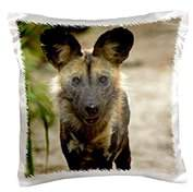 3dRose African Wild Dog, Painted Dog, Conservation Project, Zimbabwe, Africa, Pillow Case, 16 by 16-inch