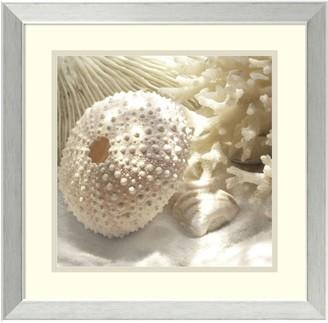 Amanti Art ''Coral Shell I'' Framed Wall Art