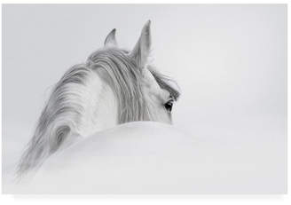 """White Horse PhotoINC Studio on White Canvas Art - 27"""" x 33.5"""""""