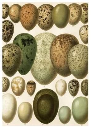 European Eggs Print