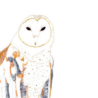 Amber Michelle Fine Art Owl by Amber Duke Graphic Art