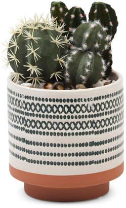 9.5in Faux Cactus In Terra Cotta Pot