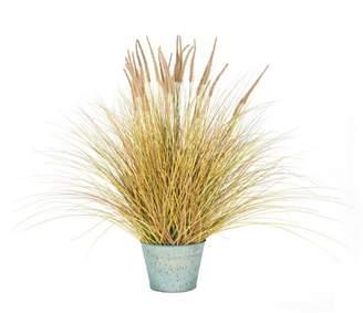 Breakwater Bay Dogtail Grass Bush in Round Metal Pot
