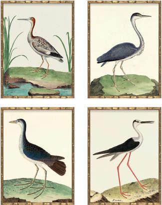 Serena & Lily Vintage Birds in Bamboo Frame - Set of Four I (Birds I, III, IV, V) by Whalebone Creek Prints