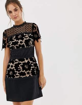 Coast lace shift block dress