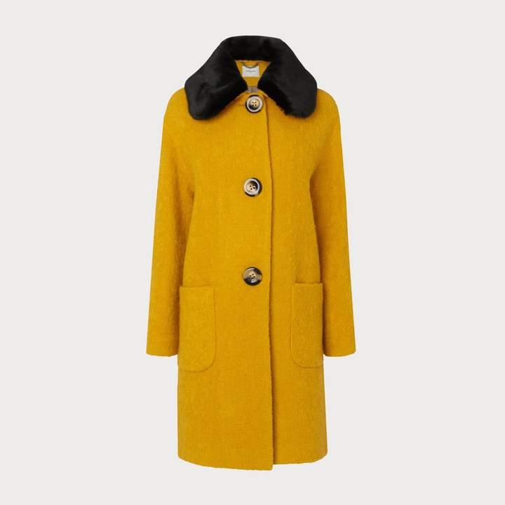 Aster Yellow Coat