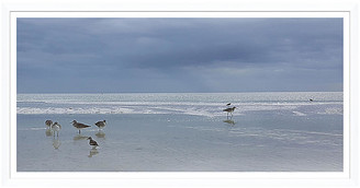 Soicher Marin Gulls and the Sea in White Frame Art