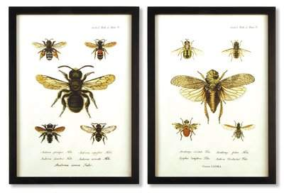 Wayfair Bee 2 Piece Framed Graphic Art Set