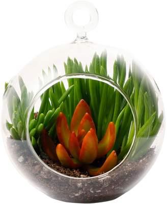 Shop Succulents Mini Succulent Terrarium
