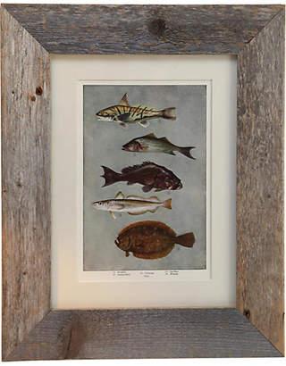 One Kings Lane Vintage Framed Print of Sea Life