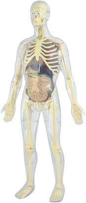 Miniland Human Anatomy