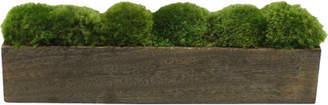 Bougainvillea Moss in Planter