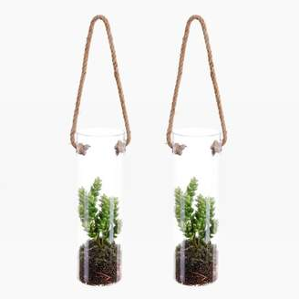 west elm Faux Succulent in Hanging Vase (Set of 2) - Green